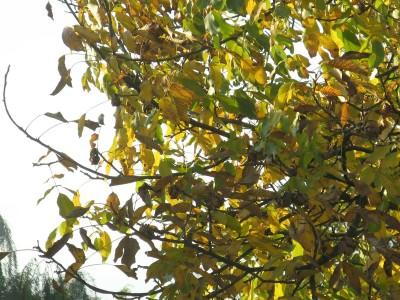 Gałązka i żółte liście