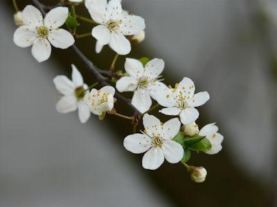 kwiaty nadrzewach ikrzewach #6