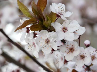 kwiaty na drzewach i krzewach #1