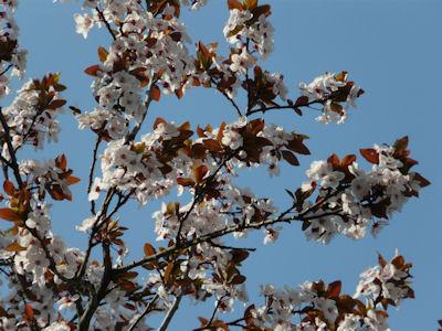 kwiaty nadrzewach ikrzewach #4