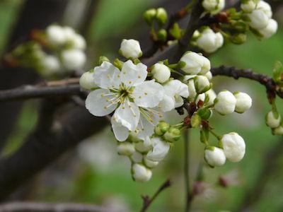 kwiaty nadrzewach ikrzewach #2