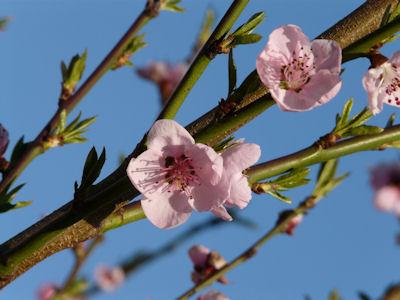 kwiaty nadrzewach ikrzewach #3
