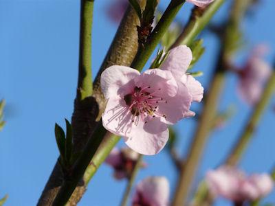 kwiaty nadrzewach ikrzewach #5