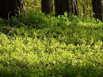 W lesie #4