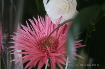 Kwiat zfiltrem polaryzacyjnym