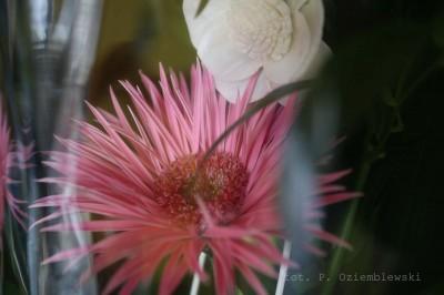 Kwiat - zdjęcie podstawowe