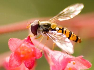 Zdjęcia makro - owady