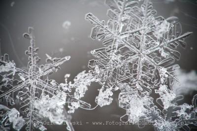 Płatki śniegu