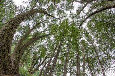 Zdjęcia drzew - obiektyw rybie oko Samyang 8mm #1