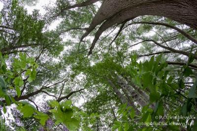 Zdjęcia drzew - obiektyw rybie oko Samyang 8mm #3