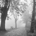 Zdjęcie po konwersji do czerni i bieli - promenada we mgle