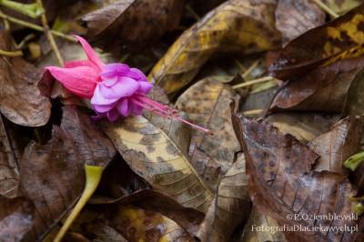 Barwny kwiat nażółtych liściach