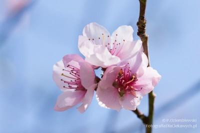 Wiosna wogrodzie