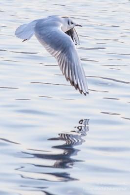 Ptak iodbicie wwodzie