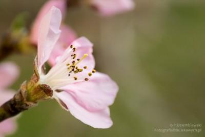Zdjęcie makro kwiatów aparatem kompaktowym