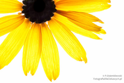 Kwiat nabiałym tle