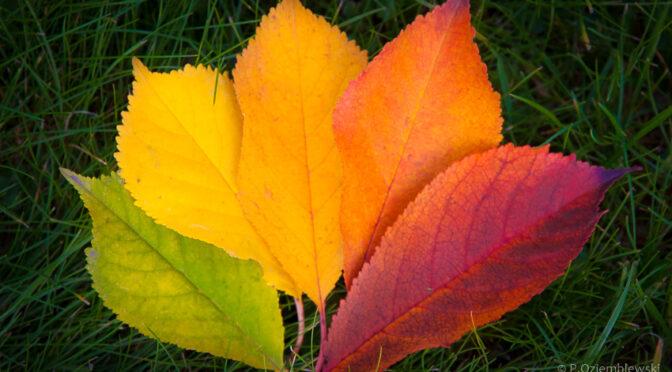 10 sposobów na jesienne zdjęcia liści