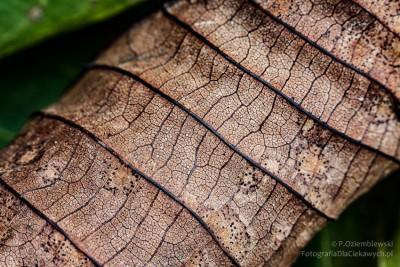 Zbliżenie nawysuszony liść