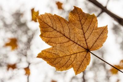 Jesienne liście #3