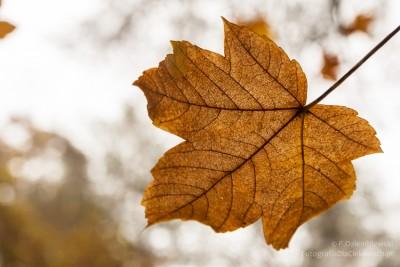Jesienne liście #2