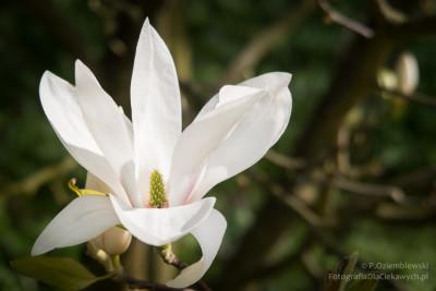 arboretum-kurnik-3608_850
