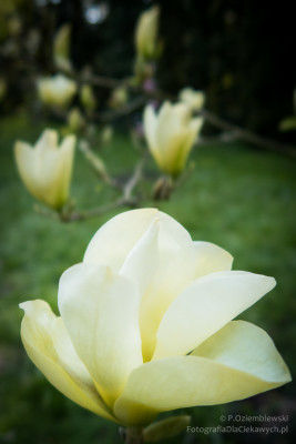 arboretum-kurnik-3639_850