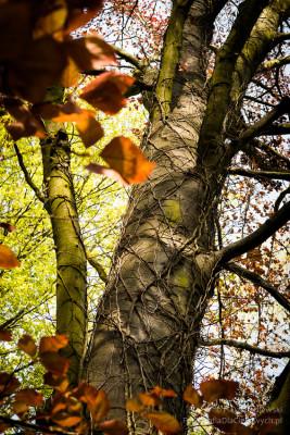arboretum-kurnik-3686_850