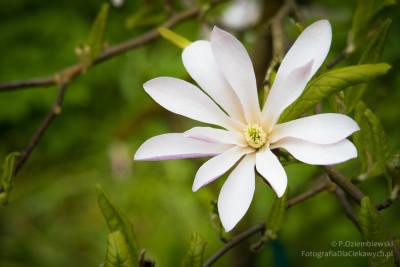 arboretum-kurnik-3707_850