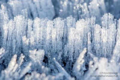Zdjęcia zimy - szron wzbliżeniu