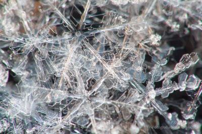 Zdjęcia zimy - płatki śniegu