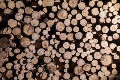 Bele drewna