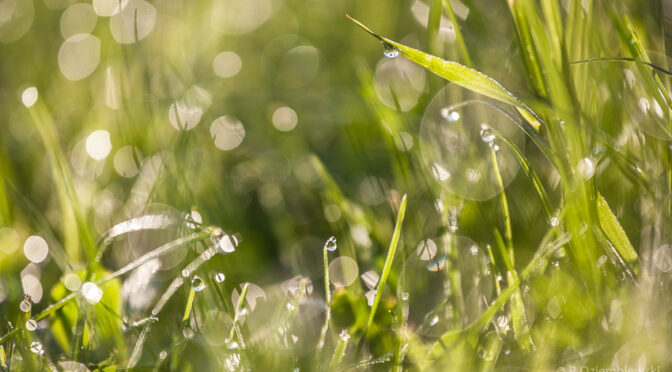 Buszując w porannej trawie – kilka propozycji na zdjęcia z kroplami rosy