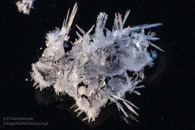 zimowe zdjęcia - lodowe kwiatki