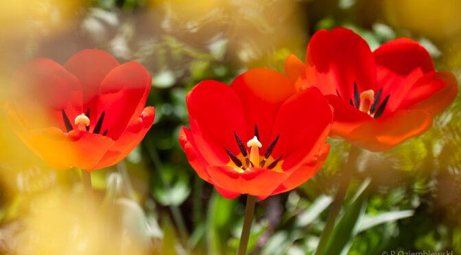 Wiosenne wyzwania fotograficzne – 15 ćwiczeń i inspiracji