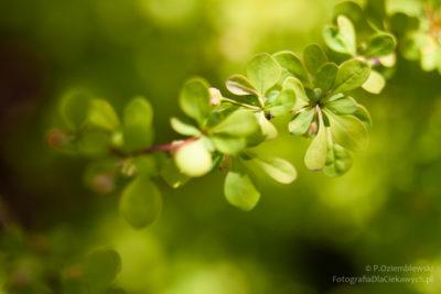 Zielone gałązki iświatłocień