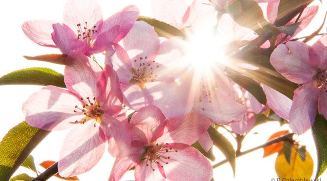Jeszcze jedno podejście do kwiatów na drzewach