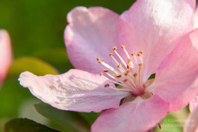 Kwiaty nadrzewach