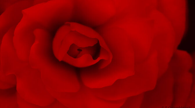Kwiatek dla Pań z okazji ich święta