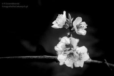 Zdjęcie - wersja czarno-biała