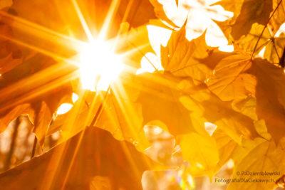 Słońce prześwitujące między liśćmi przy mocno przymkniętej przysłonie