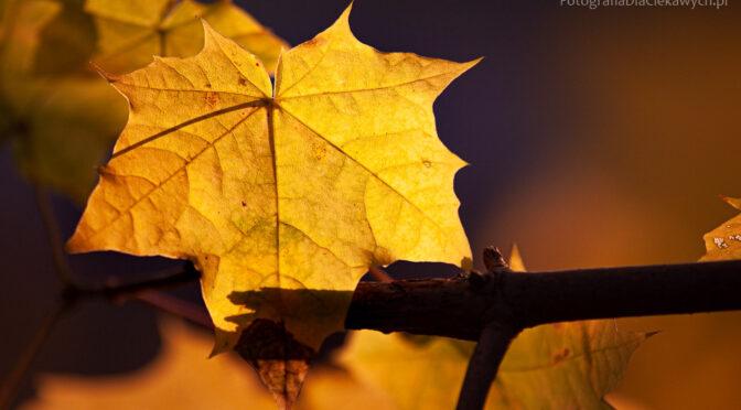 17 plus 10 sposobów na jesienne liście