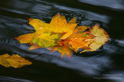 Jesienne liście nawodzie