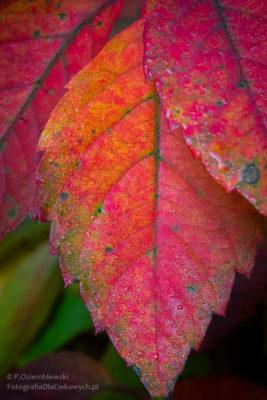 Nasycone kolory liści