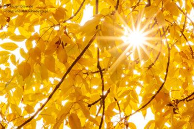 Promienie światła przechodzące przezliście przy przymkniętej przysłonie ipodniesioną czułością ISO