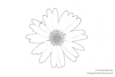 Kwiatek 1 - kolorowanka