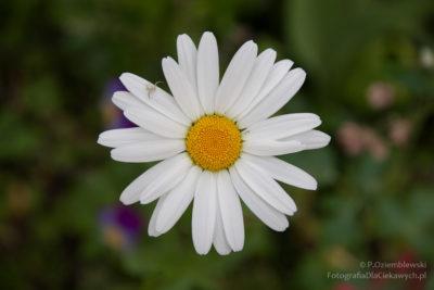 Kwiatek 1 - zdjecie