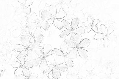 Kwiatek 2 - kolorowanka