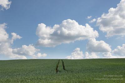 zdjęcie zwykorzystaniem filtra szarego połówkowego
