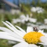 Much na kwiatku